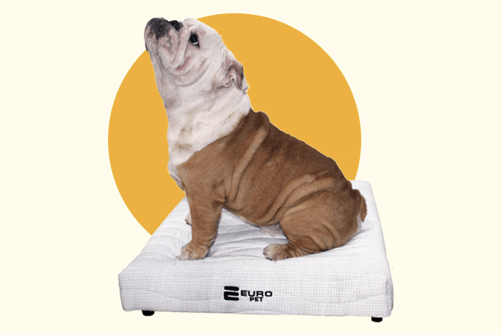 Cama para cachorro: Euro Pet!